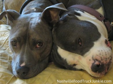 Clemenza & Bella - Our 2 Pitbull Rescues